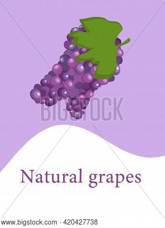 A Bunch Of Grapes Template With The Inscription Natural Grapes For Use In Web Design Or Packaging