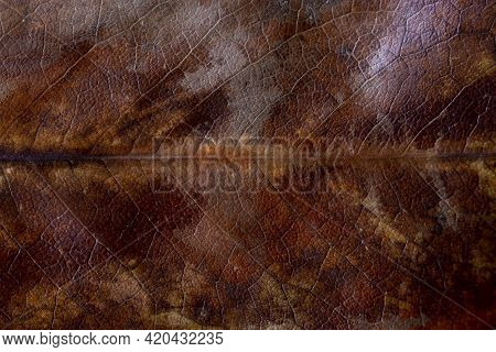 Dry Autumn Magnolia Leaf Texture. Dried Brown Magnolia Leaf With Yellow Spots Texture Background. Te