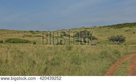 A Dirt Road Winds Up A Hill In The African Savannah. An Elephant Walks Along The Lush Green Grass. A