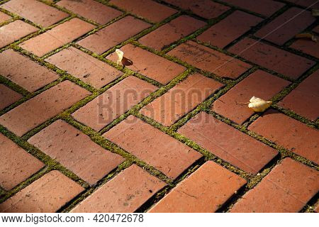 Moss Between The Cobblestones. Green Moss Between Brown Paving Stones. The Texture Of The Paved Tile