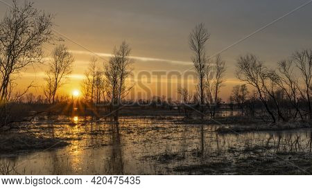 Flooded Trees During A Period Of High Water At Sunset. Trees In Water At Dusk. Landscape With Spring