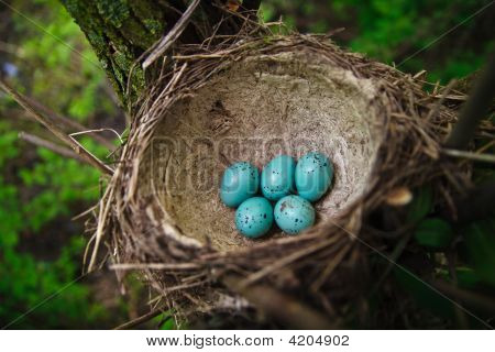 Nest With Green Eggs