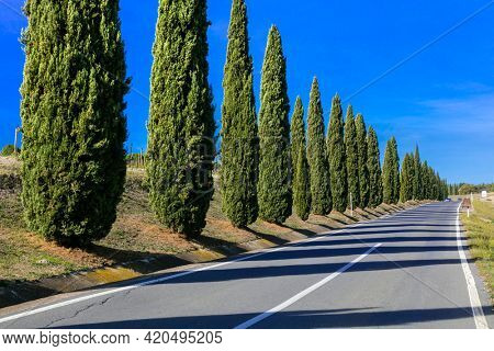 Road with cypresses. Typical rural scenery of Tuscany, Italy