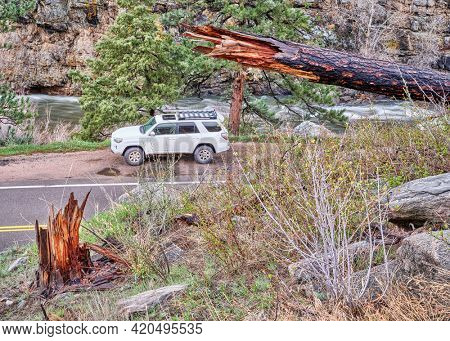 Fort Collins, CO, USA - May 11, 2021: Toyota 4Runner SUV (2016 Trail model) in the Poudre River Canyon in Colorado, springtime scenery with high water flow and a pine tree burned by recent wildfire.