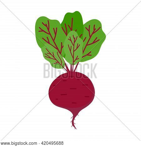 A Large Red Beetroot With Green Leaves On A White Background. Beetroot Isolate, Icon, Banner, Label,