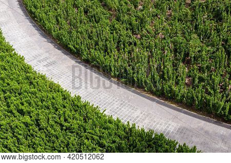 Aerial Top View Forest Tree. Beautiful Road In Summer Forest Top View From Above, Aerial Landscape.