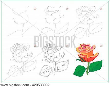 Page Shows How To Learn To Draw Step By Step Beautiful Rose Flower. Developing Children Skills For D