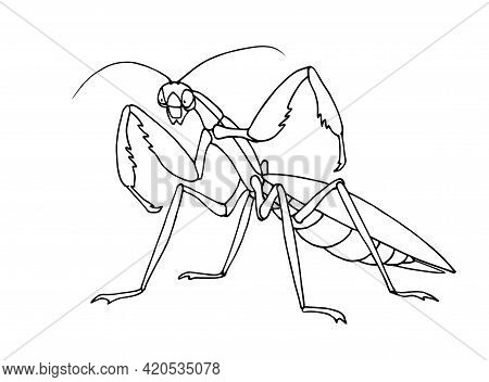 Mantis Before Attack, Invertebrate Insect, Voracious Predator, Funny Character, Vector Illustration