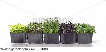 Several Containers With A Mix Of Microgreens On A White Background With Space For Text. Microgreens