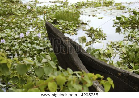Boat Lily Pond