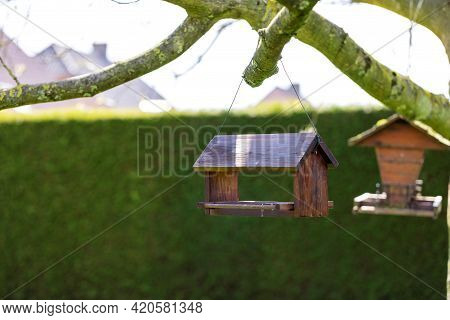 A Portrait Of A Bird Feeder House Made Of Wood Hanging Below A Walnut Tree On A Sunny Day. The Small