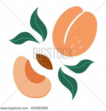 Apricot. Exotic Tropical Peaches Or Apricots Fresh Fruit, Whole And Half Juicy Peach. Vector Cartoon