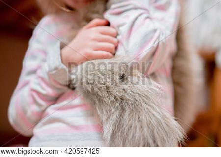 Kid Hand Holds A Piece Of Real Grey Fur Tail. Wool. Animals. Animal. Young. Fashion. Education