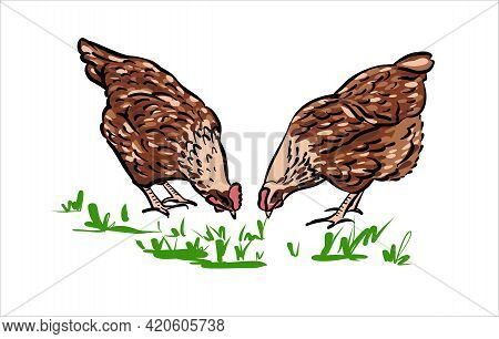 Chickens Peck At The Grass. Hand-drawn Sketch Illustration, Color.
