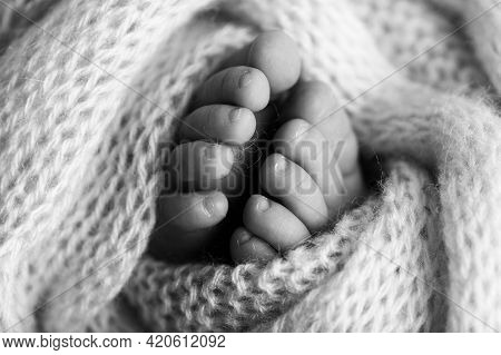 Photo Of The Legs Of A Newborn. Baby Feet Covered With Wool Isolated Background. The Tiny Foot Of A