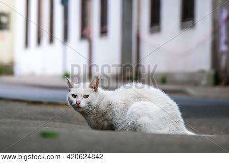 A White Strayed Cat Sitting On A Sidewalk With Connived Very Narrow Eyes, Looking Tired And Sad, Hun