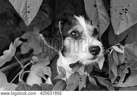 A Cute Shy Puppy Dog Is In Nature In A Black And White Image Format