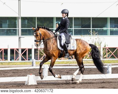 Dressage Rider In Competition With Wonderful Brown Lusitano Horse.