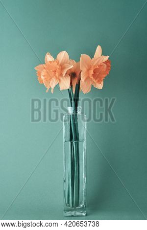 Bouquet Of Pink Narcissus Flowers In Glass Vase On Cyan Background. Creative Daffodils, Close Up