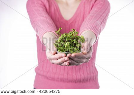 A Woman In A Pink T-shirt Holds Out Sorrel Microgreens On A White Background. Delivery And Cultivati