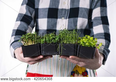 Woman In Plaid Shirt Holds A Lot Of Microgreens In Her Hands In Brown Trays, Microgreens Delivery, H
