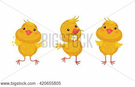 Cute Chicken Carrying Flower In Beak And Jumping Vector Set