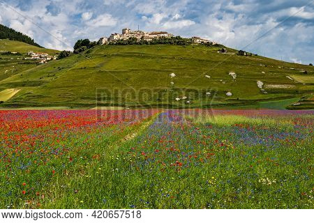 Lentil Flowering With Poppies And Cornflowers In Castelluccio Di Norcia, National Park Sibillini Mou
