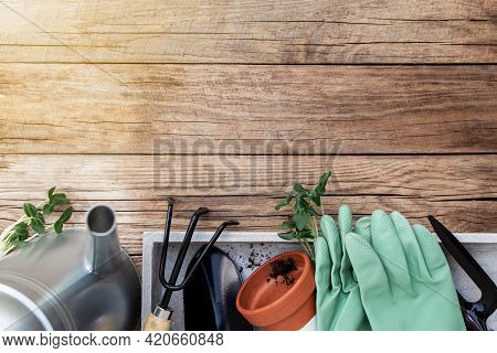 Gardening Hobby Concept Flat Lay With Green Cultivated Cucumber Seedlings, Ceramic Pot, Pitchfork, S
