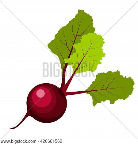Beetroot Illustration Vector Isolated On White Background.