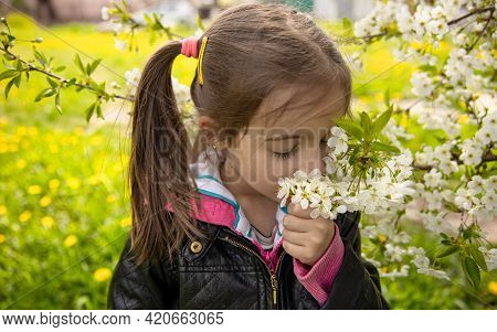 A Cute Little Girl Sniffs A Beautiful Blooming Spring Tree.