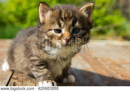 Cute Tabby Kitten Lies On White Plaid At Home. Newborn Kitten, Baby Cat, Kid Animal And Cat Concept.