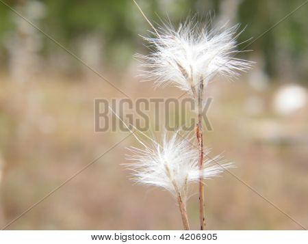 Fluffy Grass