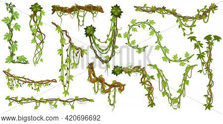 Tropical Hanging Vines. Jungle Liana Climbing Plants, Wild Rainforest Vines Branches With Leaves Iso