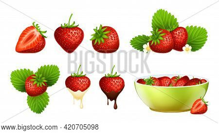 Red Strawberry. Realistic Berries, Strawberries Plants With Leaf And Flowers. Fresh Farm Raw Food In