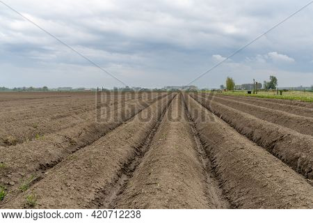 Low Angle Close Up View Of A Freshly Plowed And Planted Farm Field With Healthy Brown Earth