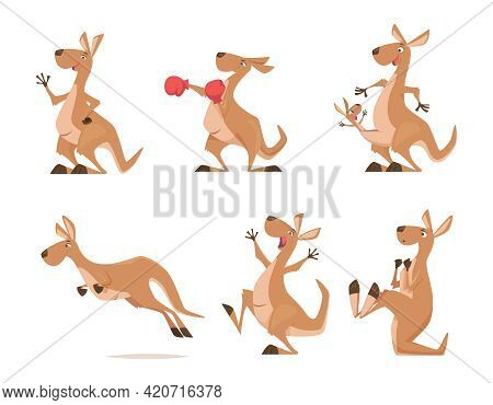 Kangaroo. Tropical Wild Animal Kangaroo From Australia Exact Vector Cartoon Funny Characters Isolate