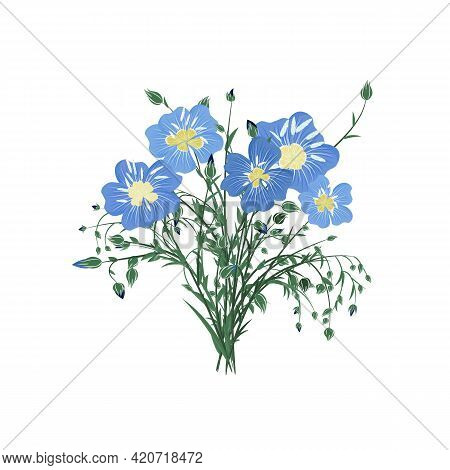 A Bouquet Of Flax Flowers Isolated On A White Background. A Bunch Of Blue Flowers With Buds And Leav
