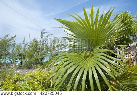 The View Of Tropical Plants Close To The Beach On Half Moon Cay Uninhabited Island (bahamas).