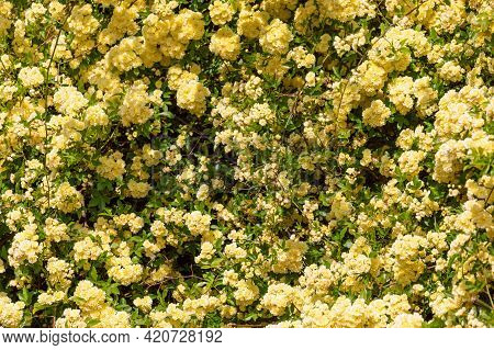 Full Frame Background Of Yellow Flowers (selective Focus)