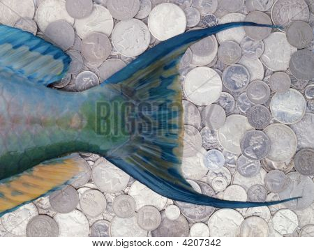 Parrott Fish Tail On Background Of International Coins