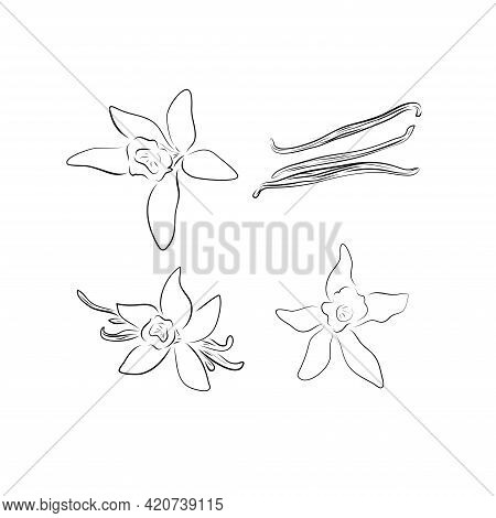 Vector Flower And Pod Vanilla In Hand Drawn Sketch. Blooming Aromatic Spices, Ingredients And Season