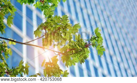 Modern Downtown Office Building Surrounded By Greenery Tree, The Surface Window Outside Reflecting C