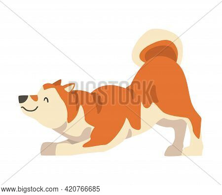 Shiba Inu As Japanese Breed Of Hunting Dog With Prick Ears And Curled Tail Playing Vector Illustrati