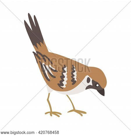 Sparrow As Brown And Grey Small Passerine Bird With Short Tail Pecking Vector Illustration