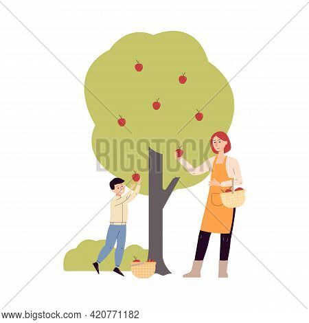 Mother And Son Gathering Harvest Of Apples, Flat Vector Illustration Isolated.