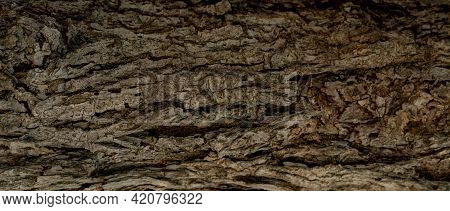 Closeup Texture Of Old Tree Bark. Pattern Of Natural Tree Bark Abstract Background. Rough Texture Su
