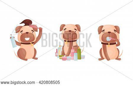 Cartoon Pug Dog Character Grooming Brushing Teeth And Setting Fur With Spray Vector Set