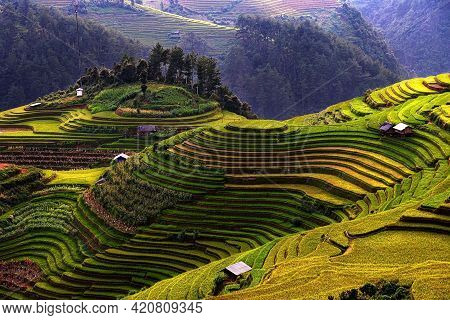 Rice Fields On Terraced Beautiful Shape Of Mu Cang Chai, Yenbai, Vietnam.