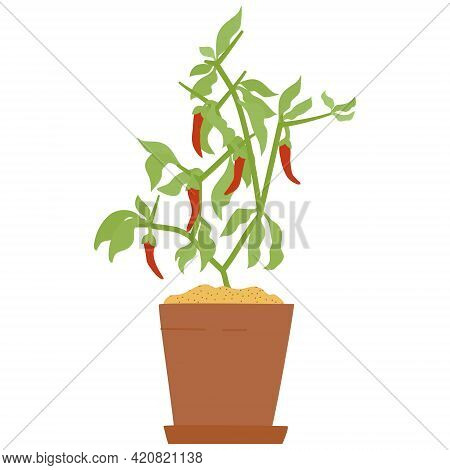 Drawing Of Chilli Pepper In Clay Pot