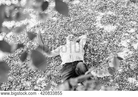 Enjoying Spring Day. Daydreaming. Happy Smiling Senior Man Looking Up Lying. Old Man Imagining Good
